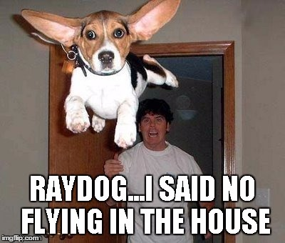 RayDog is grounded? | RAYDOG...I SAID NO FLYING IN THE HOUSE | image tagged in memes,raydog | made w/ Imgflip meme maker