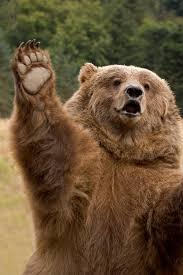 Image result for happy bear