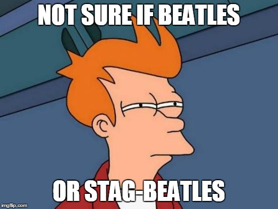 Futurama Fry Meme | NOT SURE IF BEATLES OR STAG-BEATLES | image tagged in memes,futurama fry | made w/ Imgflip meme maker