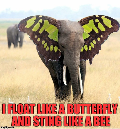 I FLOAT LIKE A BUTTERFLY AND STING LIKE A BEE | made w/ Imgflip meme maker