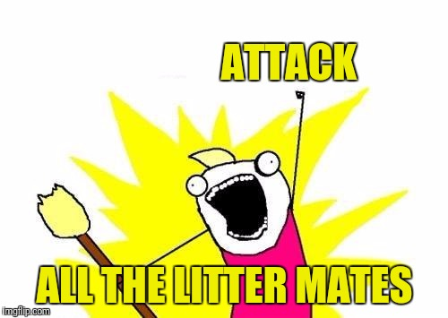 X All The Y Meme | ATTACK ALL THE LITTER MATES | image tagged in memes,x all the y | made w/ Imgflip meme maker