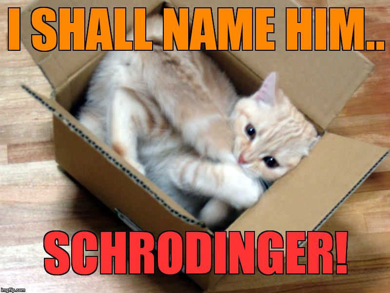 Cat in a Box | I SHALL NAME HIM.. SCHRODINGER! | image tagged in cat in a box | made w/ Imgflip meme maker