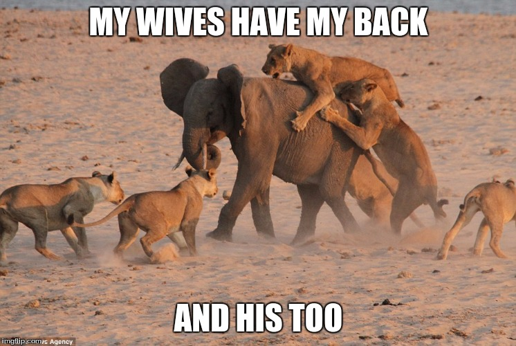 MY WIVES HAVE MY BACK AND HIS TOO | made w/ Imgflip meme maker