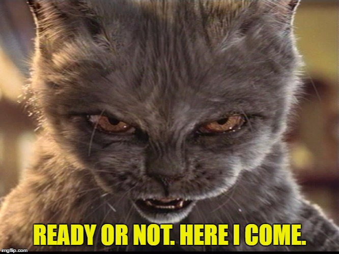 Evil-Cat | READY OR NOT. HERE I COME. | image tagged in evil-cat | made w/ Imgflip meme maker