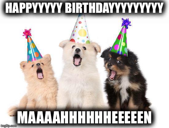 happy birthday puppy meme happy birthday puppies   Imgflip happy birthday puppy meme