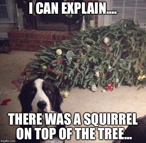 Dog Christmas Tree | I CAN EXPLAIN.... THERE WAS A SQUIRREL ON TOP OF THE TREE... | image tagged in dog christmas tree | made w/ Imgflip meme maker