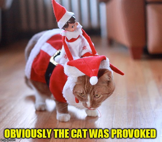 OBVIOUSLY THE CAT WAS PROVOKED | made w/ Imgflip meme maker