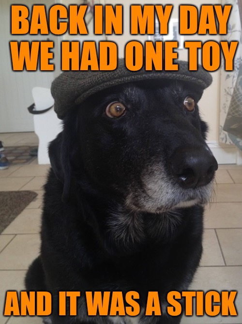 Back in my day we had one toy  | BACK IN MY DAY WE HAD ONE TOY AND IT WAS A STICK | image tagged in back in my day dog,dogs,memes,we had one toy,my templates challenge | made w/ Imgflip meme maker