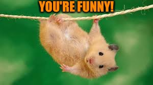 YOU'RE FUNNY! | made w/ Imgflip meme maker