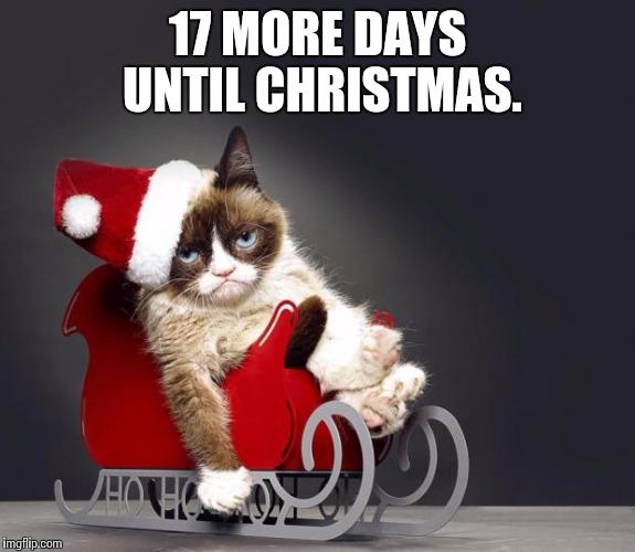 Hd Cat Memes