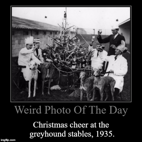 I Tried Looking For Where This Picture Was Taken, Didn't Get Anywhere... | Weird Photo Of The Day | Christmas cheer at the greyhound stables, 1935. | image tagged in funny,demotivationals,weird,photo of the day,christmas cheer,greyhound stables | made w/ Imgflip demotivational maker