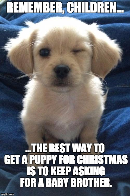 Harmless guilty pleasure puppy | REMEMBER, CHILDREN... ...THE BEST WAY TO GET A PUPPY FOR CHRISTMAS IS TO KEEP ASKING FOR A BABY BROTHER. | image tagged in harmless guilty pleasure puppy | made w/ Imgflip meme maker