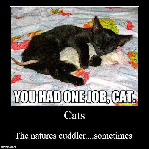 "I maybe keep on making ""You had one job"". 