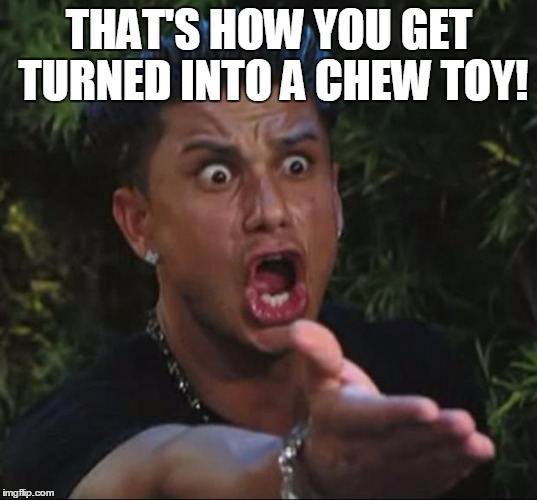 Pauly | THAT'S HOW YOU GET TURNED INTO A CHEW TOY! | image tagged in pauly | made w/ Imgflip meme maker