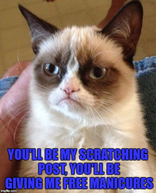 Grumpy Cat Meme | YOU'LL BE MY SCRATCHING POST, YOU'LL BE GIVING ME FREE MANICURES | image tagged in memes,grumpy cat | made w/ Imgflip meme maker
