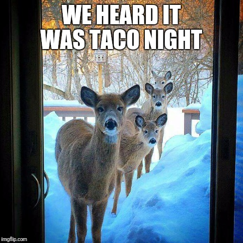 We heard it was taco night  | WE HEARD IT WAS TACO NIGHT | image tagged in deer,tacos,taco tuesday,funny,cute,animals | made w/ Imgflip meme maker