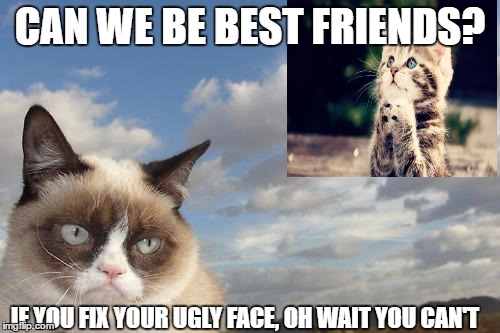 Grumpy Cat Sky | CAN WE BE BEST FRIENDS? IF YOU FIX YOUR UGLY FACE, OH WAIT YOU CAN'T | image tagged in memes,grumpy cat sky,grumpy cat | made w/ Imgflip meme maker