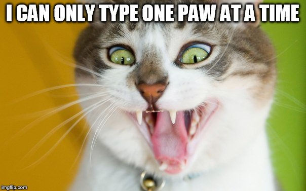 I CAN ONLY TYPE ONE PAW AT A TIME | made w/ Imgflip meme maker