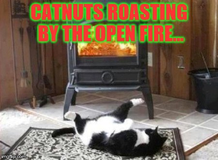 Saw this on FB, thought it might bring up a hairball or two | CATNUTS ROASTING BY THE OPEN FIRE... | image tagged in christmas,cats,funny memes | made w/ Imgflip meme maker