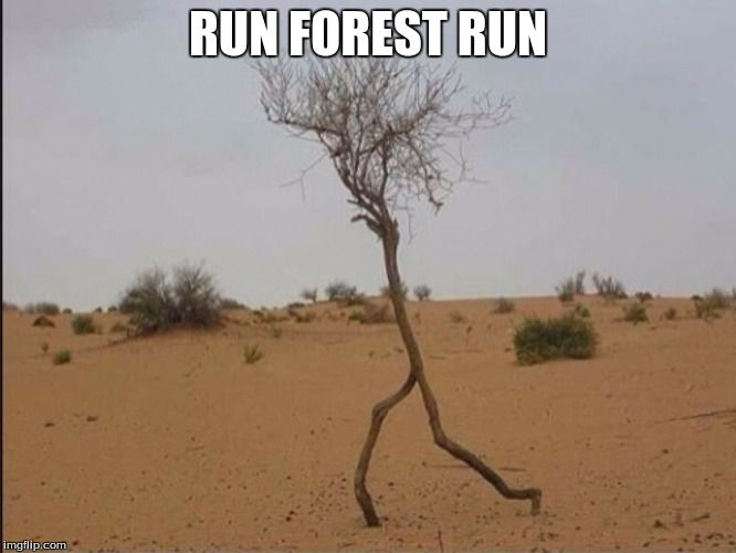 RUN FOREST RUN | made w/ Imgflip meme maker