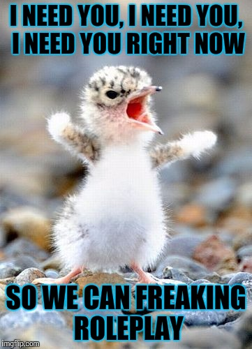Screaming Bird | I NEED YOU, I NEED YOU, I NEED YOU RIGHT NOW SO WE CAN FREAKING ROLEPLAY | image tagged in screaming bird | made w/ Imgflip meme maker