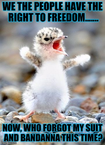 Screaming Bird | WE THE PEOPLE HAVE THE RIGHT TO FREEDOM....... NOW, WHO FORGOT MY SUIT AND BANDANNA THIS TIME? | image tagged in screaming bird | made w/ Imgflip meme maker