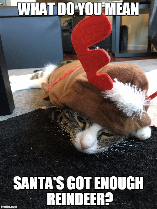 Reindeer cat |  WHAT DO YOU MEAN; SANTA'S GOT ENOUGH REINDEER? | image tagged in christmas,grumpy cat christmas,reindeer,cute cat,santa | made w/ Imgflip meme maker