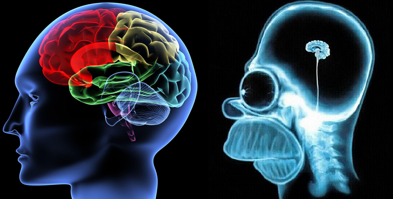 brain versus homer brain meme template