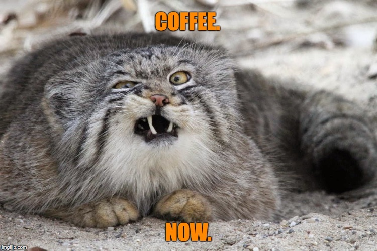 pallas's cat | image tagged in coffee addict | made w/ Imgflip meme maker