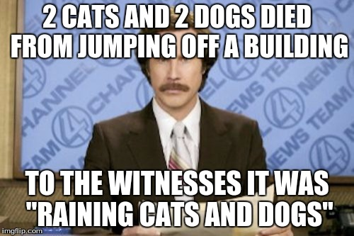 "Ron Burgundy Meme |  2 CATS AND 2 DOGS DIED FROM JUMPING OFF A BUILDING; TO THE WITNESSES IT WAS ""RAINING CATS AND DOGS"" 
