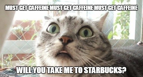 MUST GET CAFFEINE MUST GET CAFFEINE MUST GET CAFFEINE WILL YOU TAKE ME TO STARBUCKS? | made w/ Imgflip meme maker