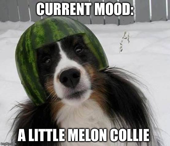 Current mood: A little Melon Collie | CURRENT MOOD: A LITTLE MELON COLLIE | image tagged in melon collie,memes,funny,mood | made w/ Imgflip meme maker