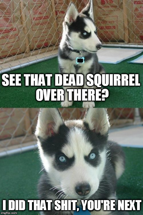 Insanity Puppy Meme | SEE THAT DEAD SQUIRREL OVER THERE? I DID THAT SHIT, YOU'RE NEXT | image tagged in memes,insanity puppy | made w/ Imgflip meme maker