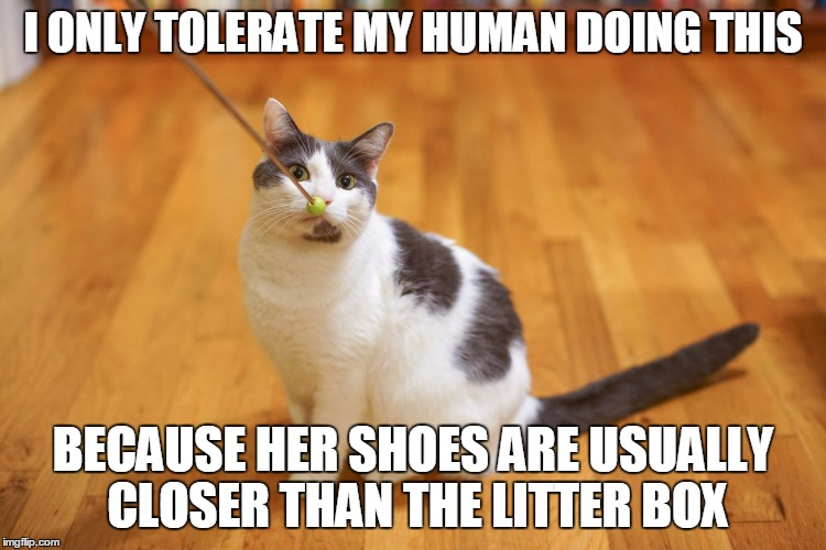 I ONLY TOLERATE MY HUMAN DOING THIS BECAUSE HER SHOES ARE USUALLY CLOSER THAN THE LITTER BOX | made w/ Imgflip meme maker