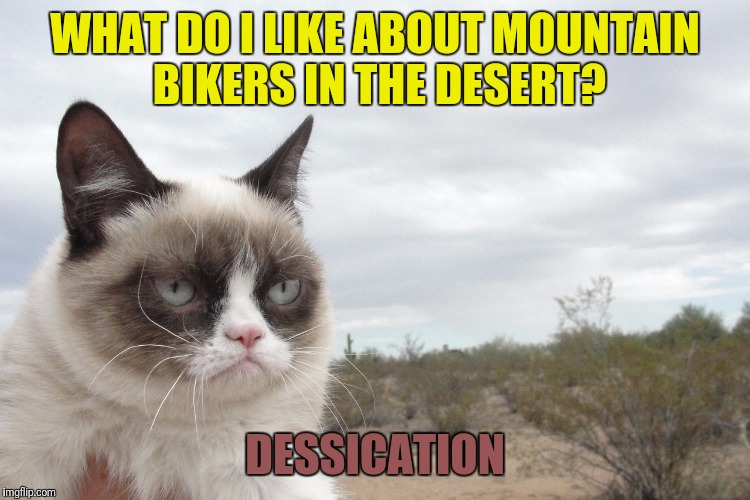 Grumpy Cat likes it when mountain bikers go out in the desert | WHAT DO I LIKE ABOUT MOUNTAIN BIKERS IN THE DESERT? DESSICATION | image tagged in memes,grumpy cat,mountain bike,dessicated people | made w/ Imgflip meme maker