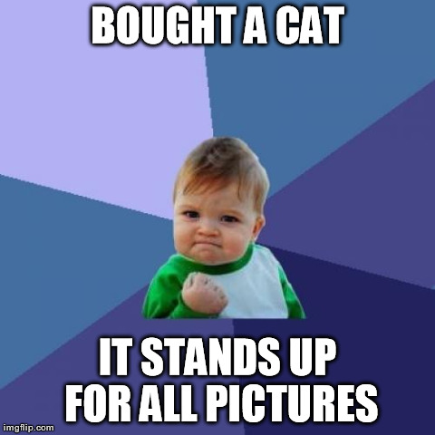 Success Kid Meme | BOUGHT A CAT IT STANDS UP FOR ALL PICTURES | image tagged in memes,success kid,AdviceAnimals | made w/ Imgflip meme maker