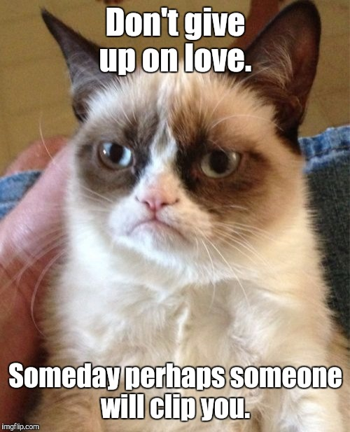 Grumpy Cat Meme | Don't give up on love. Someday perhaps someone will clip you. | image tagged in memes,grumpy cat | made w/ Imgflip meme maker