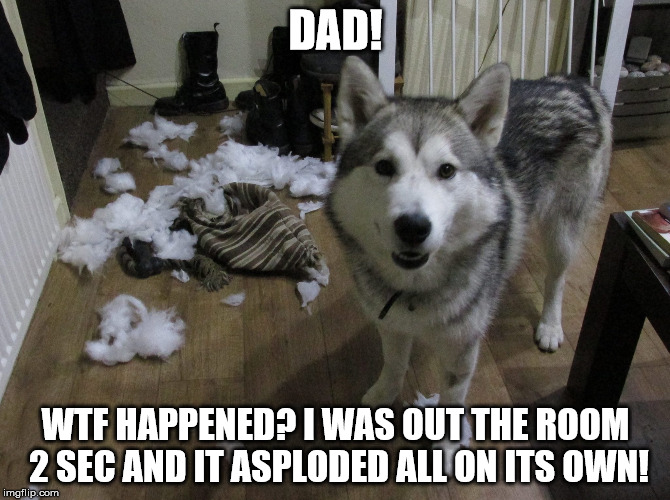 splode |  DAD! WTF HAPPENED? I WAS OUT THE ROOM 2 SEC AND IT ASPLODED ALL ON ITS OWN! | image tagged in dog,derp doge | made w/ Imgflip meme maker