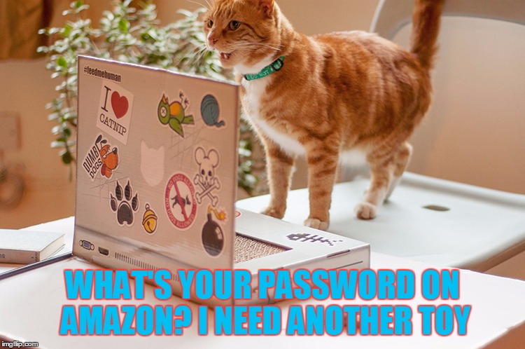 WHAT'S YOUR PASSWORD ON AMAZON? I NEED ANOTHER TOY | made w/ Imgflip meme maker