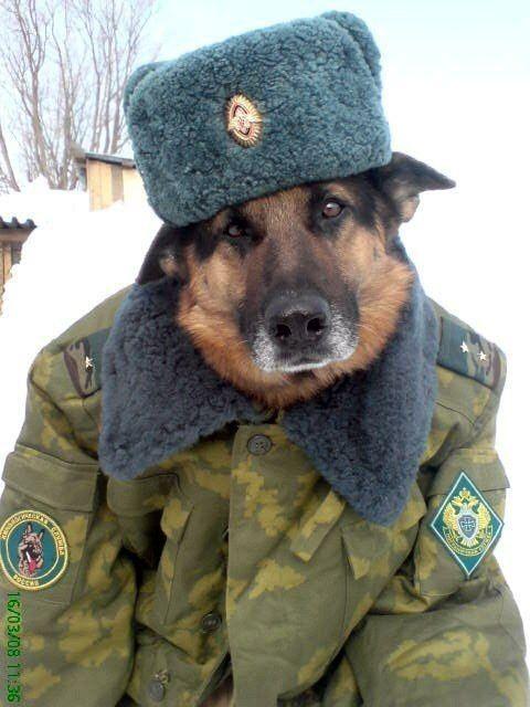 dog russian hat
