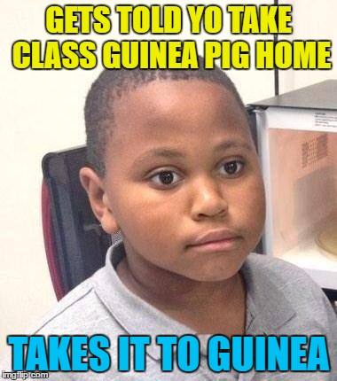 He's now Trumps ambassador to Guinea... |  GETS TOLD YO TAKE CLASS GUINEA PIG HOME; TAKES IT TO GUINEA | image tagged in memes,minor mistake marvin,guinea pig,guinea,animals | made w/ Imgflip meme maker