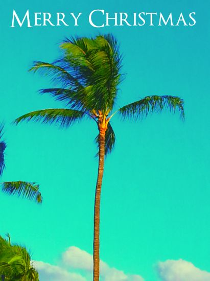 Christmas Palm Tree Blank Template Imgflip