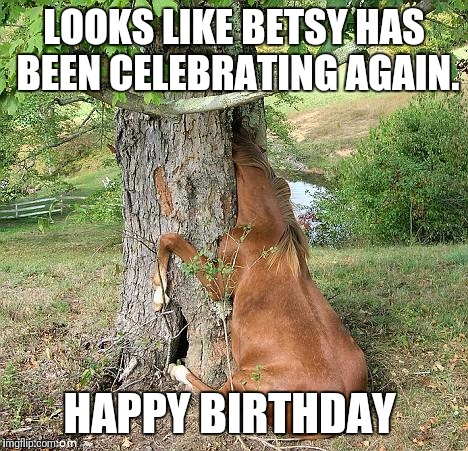 Real Horses Looks Like Betsy Has Been Cele Ting Again Happy Birthday Image Tagged