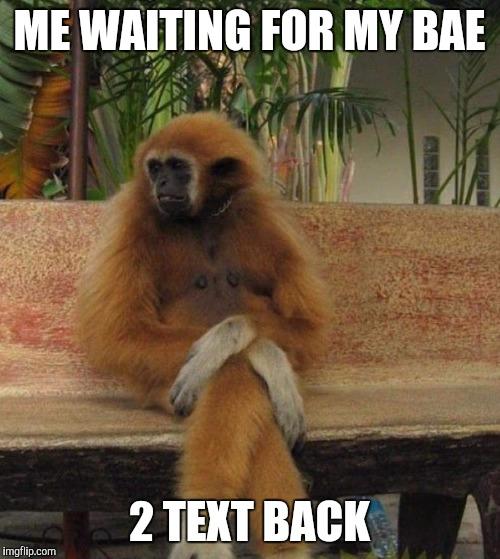 1g0117 waiting monkey imgflip