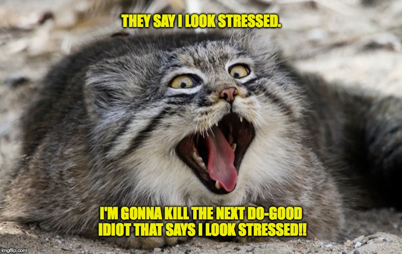 Image result for stressed cat meme