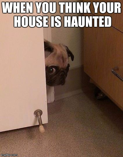 Guilty Pug | WHEN YOU THINK YOUR HOUSE IS HAUNTED | image tagged in guilty pug | made w/ Imgflip meme maker
