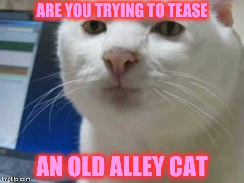 ARE YOU TRYING TO TEASE AN OLD ALLEY CAT | made w/ Imgflip meme maker
