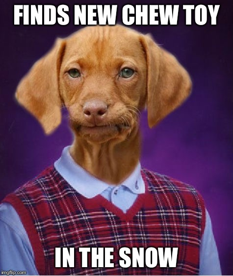 FINDS NEW CHEW TOY IN THE SNOW | made w/ Imgflip meme maker