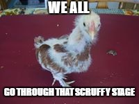 scruffy chicken | WE ALL GO THROUGH THAT SCRUFFY STAGE | image tagged in funny chicken,scruffy,teenage,funny animals,cute animals,feathers | made w/ Imgflip meme maker