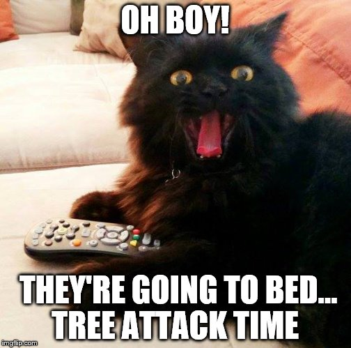 When you leave the lights on your Christmas tree and head off to bed |  OH BOY! THEY'RE GOING TO BED... TREE ATTACK TIME | image tagged in oh boy cat,memes,christmas tree,christmas,cats,funny | made w/ Imgflip meme maker
